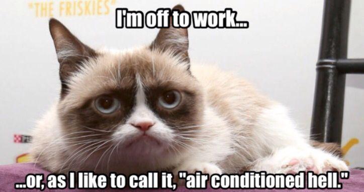 Happy Monday from Grumpy Cat.