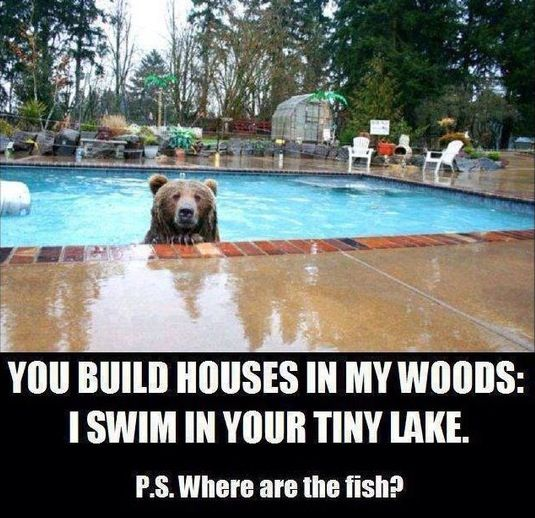 A bear in my swimming pool funny pictures hilarious for Pool builder quotes