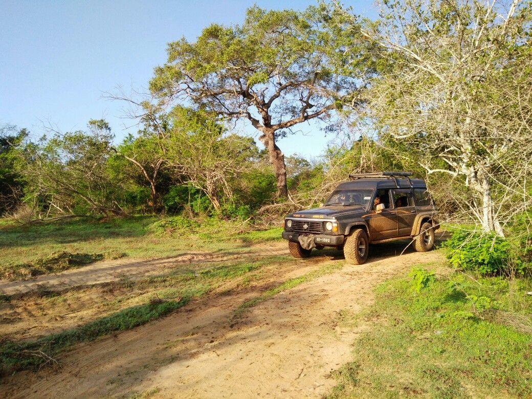 Yala Safari Sri Lanka Nissan Patrol Nissan Patrol Country Roads Safari