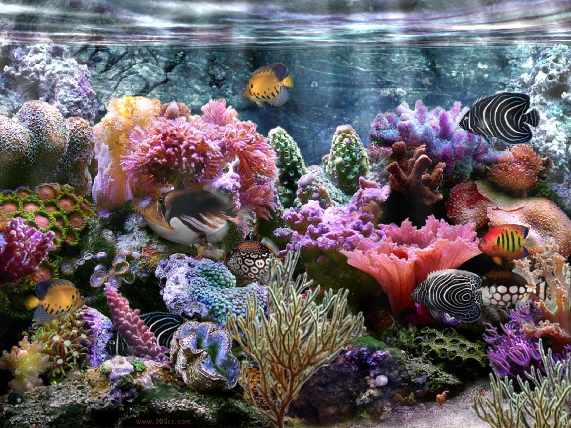 coral reef coral reef wallpaper widescreen hd wallpaper