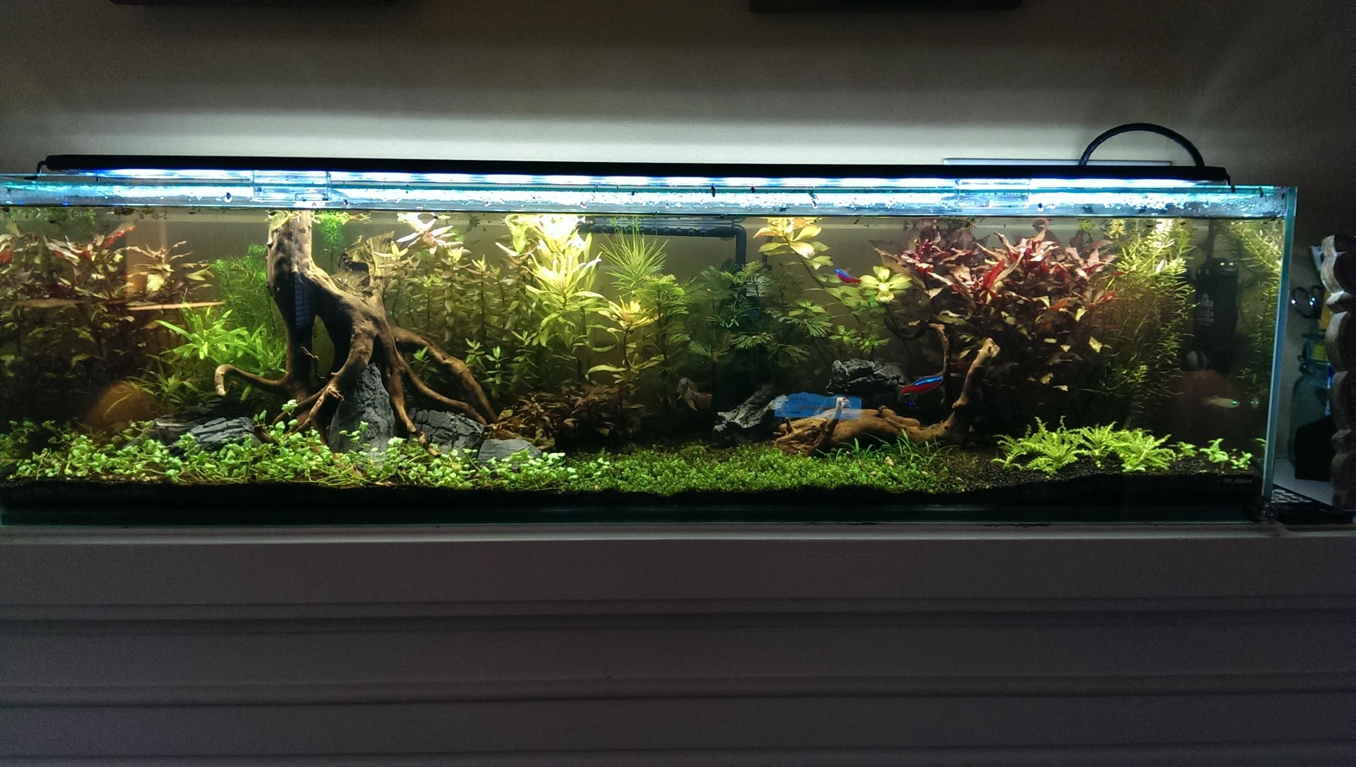 Nice driftwood with rocks mixed in 12 gallon long 2688—1520