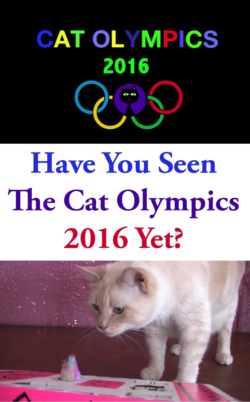 Have You Seen The Cat Olympics 2016 Yet Cats Adorable Cute Animals Olympics