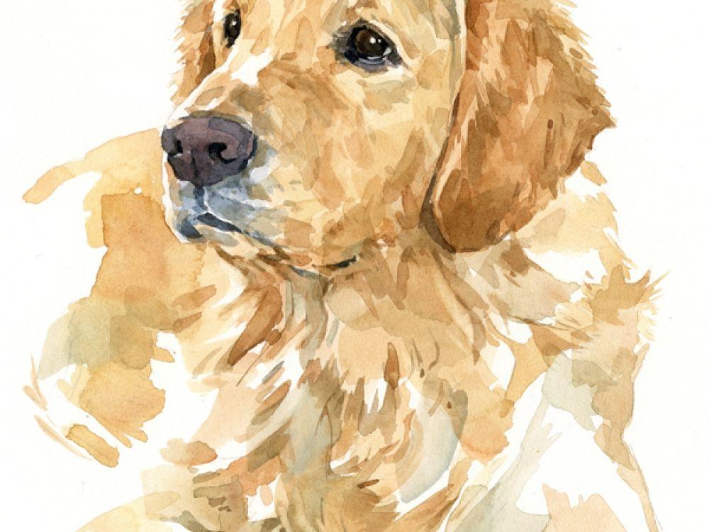 Golden Labrador Retriever 8x10 Watercolor Golden Retriever