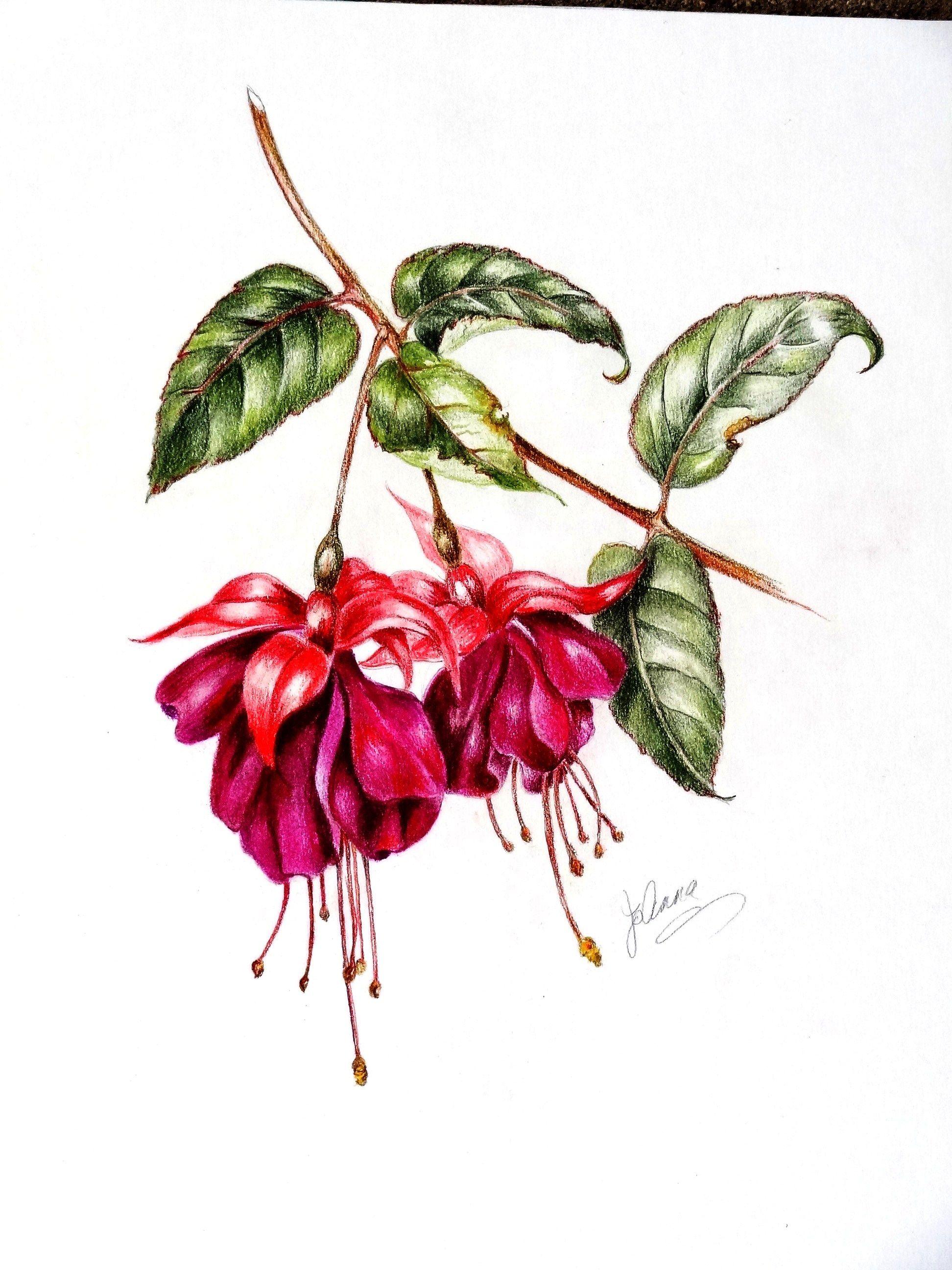 color pencils - fushia | My Mother\'s Artwork | Pinterest ...