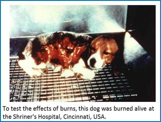Dog burned alive to test the effects of burns. http://emptyallcages.com/truth-gallery/vivisection/