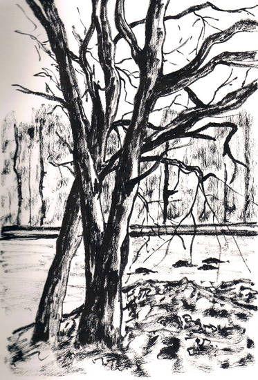 Bomen in Drenthe van Sjane de Haan | Afm. 18 x 28 cm.