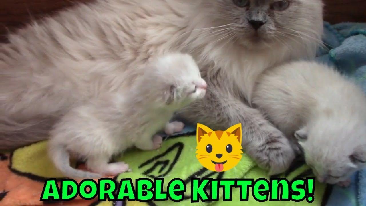 Adorable 2 Week Old Kittens Too Cute Cute Kitten Gif Kittens Cutest Cute Cat Gif