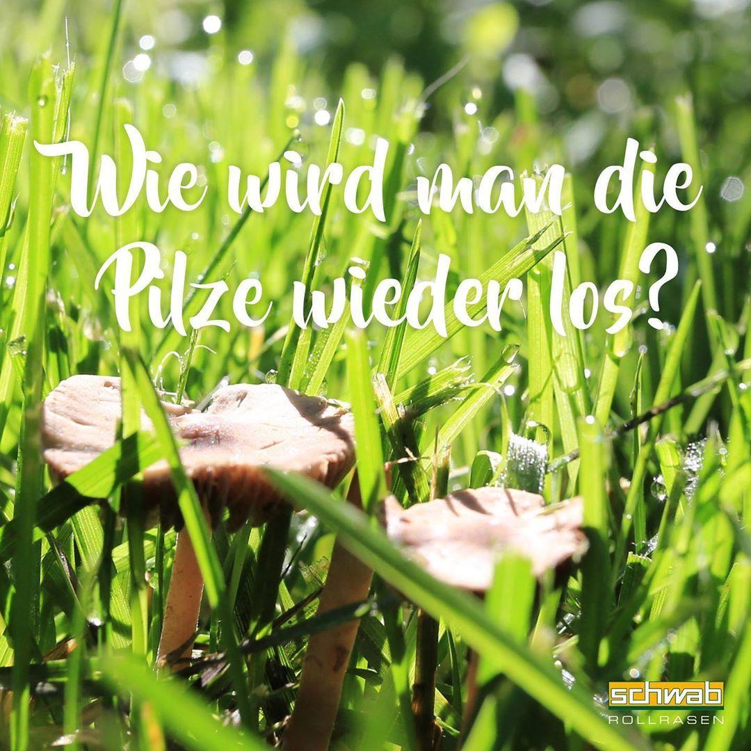 Nach Gewitter Und Bei Hohen Temperaturen Entstehen Manchmal Braune Hutpilze Sie Sind Zwar Ein Zeichen Fur Gute Bodenbiolo Pilze Im Rasen Gartenbau Gartentipps