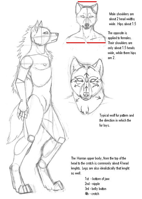 how to draw a furry wolf