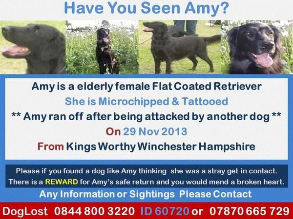Have you seen Amy? If you are in this area, and have ...