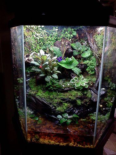 Exo Terra Dripper Plant Drip Watering System: Putting Together A Custom Paludarium
