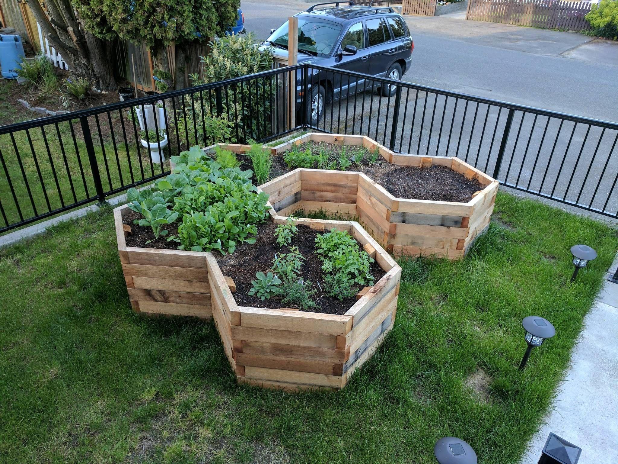 First Major Gardening Project Hexagonal Garden Beds Album On Imgur Garden Beds Vegetable Garden Raised Beds Garden Projects