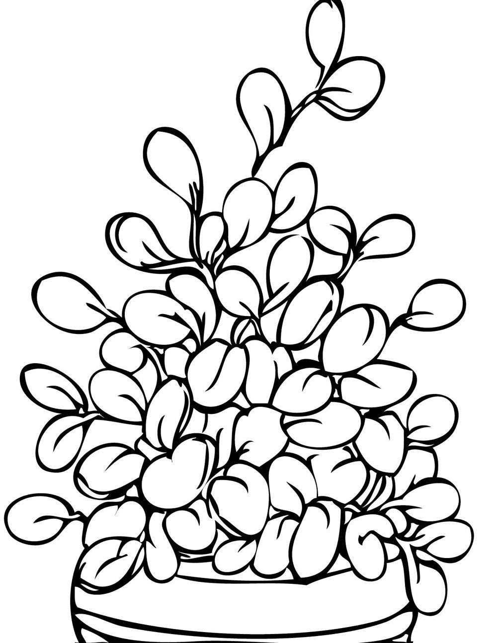 Pin Do A Mariana Matias Em Desenhos Para Pintar: Colorir E Pintar Lindos Desenhos De Plantas Arvores E