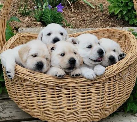 Better than a basket of fruit tbhhttps//i.redd.it
