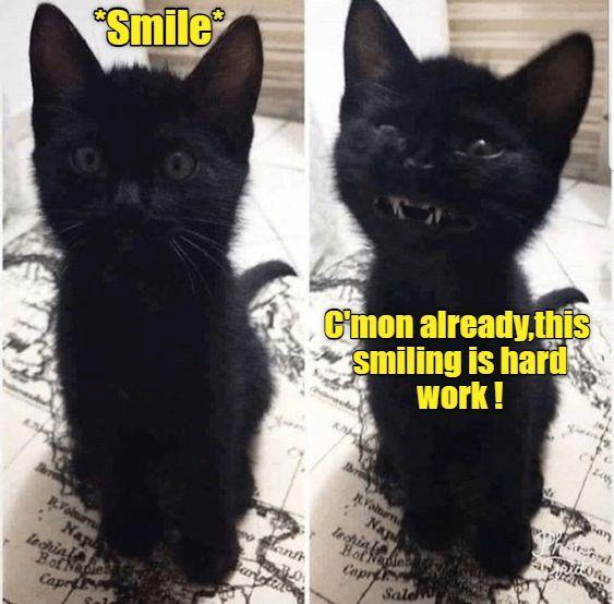 Pin By Gary Dean Lamb On Cats Cute Cats Kittens Cute Cats