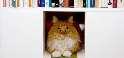 The CatCase Mixes Bookcase, Cat Tree, and Feline Fun | Catster    A bit pricey, but I think our guy would love it! If you're looking for a cheaper option, the traby range from Ikea has perfectly-sized cubbyholes.