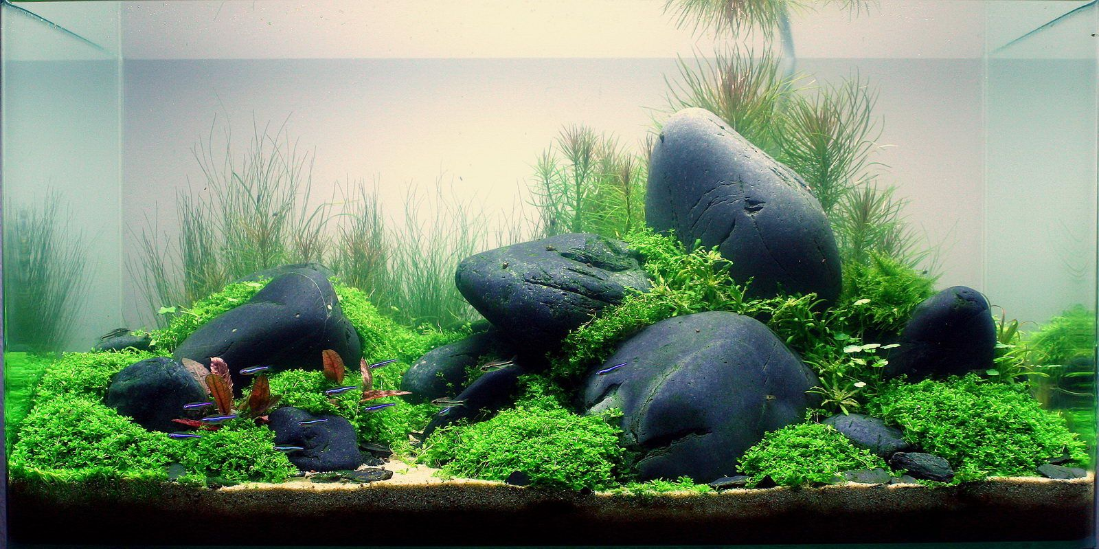 Interior Design, The Unique Of Aquascaping: Aquascape Designs