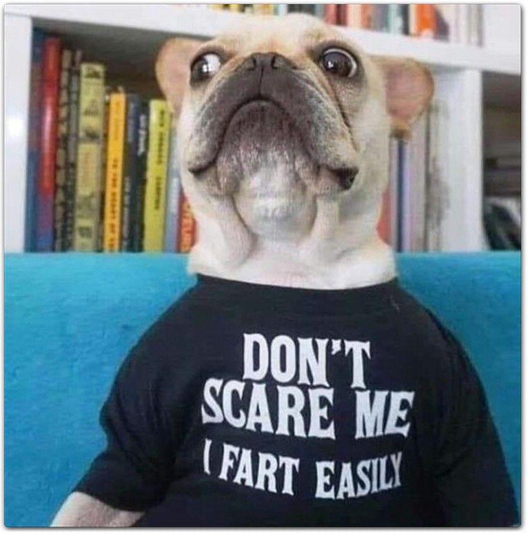 54 Funny Animals Memes 11 52 French Bulldog Funny Funny Animal Memes Bulldog Funny