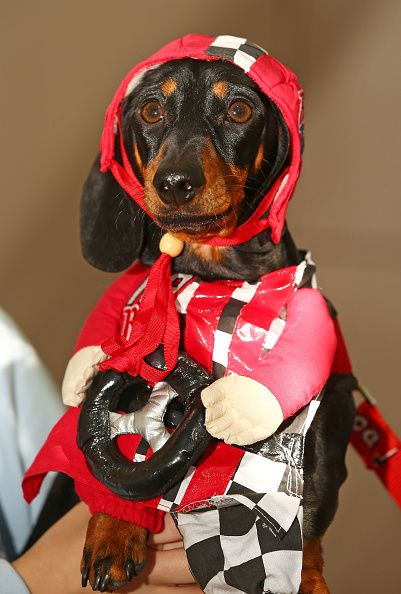 Cooper Dressed As A Racing Car Driver Competes In The Hophaus