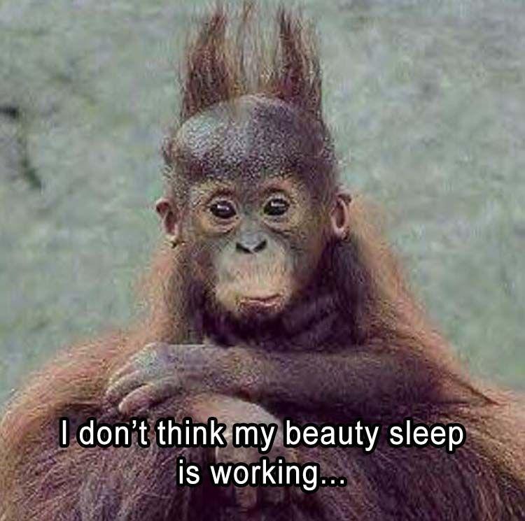 Morning Good Monkeys Memes Funny