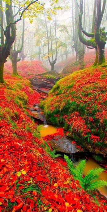 Forest of fall colors, Beautiful Beach in Gorbea, Basque Country, Spain