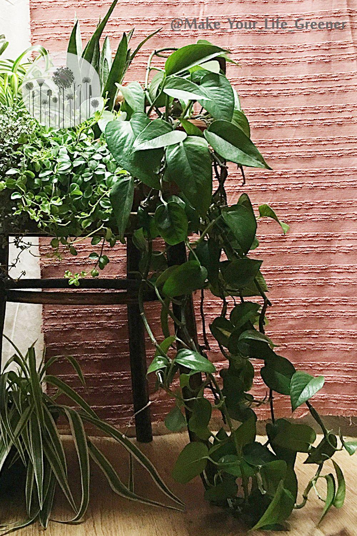 Jak Robie Porzadki W Roslinach Domowych Kwiatach Doniczkowych Vlog O Roslinach Plant Leaves Plants Leaves