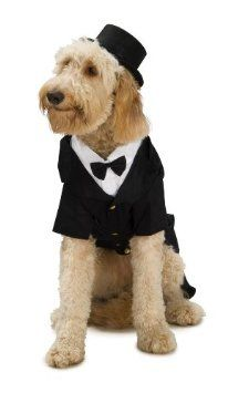Dapper Dog Tuxedo Pet Costume. Available small medium large and X-large  sc 1 st  Pinterest & Dapper Dog Tuxedo Pet Costume. Available small medium large and X ...