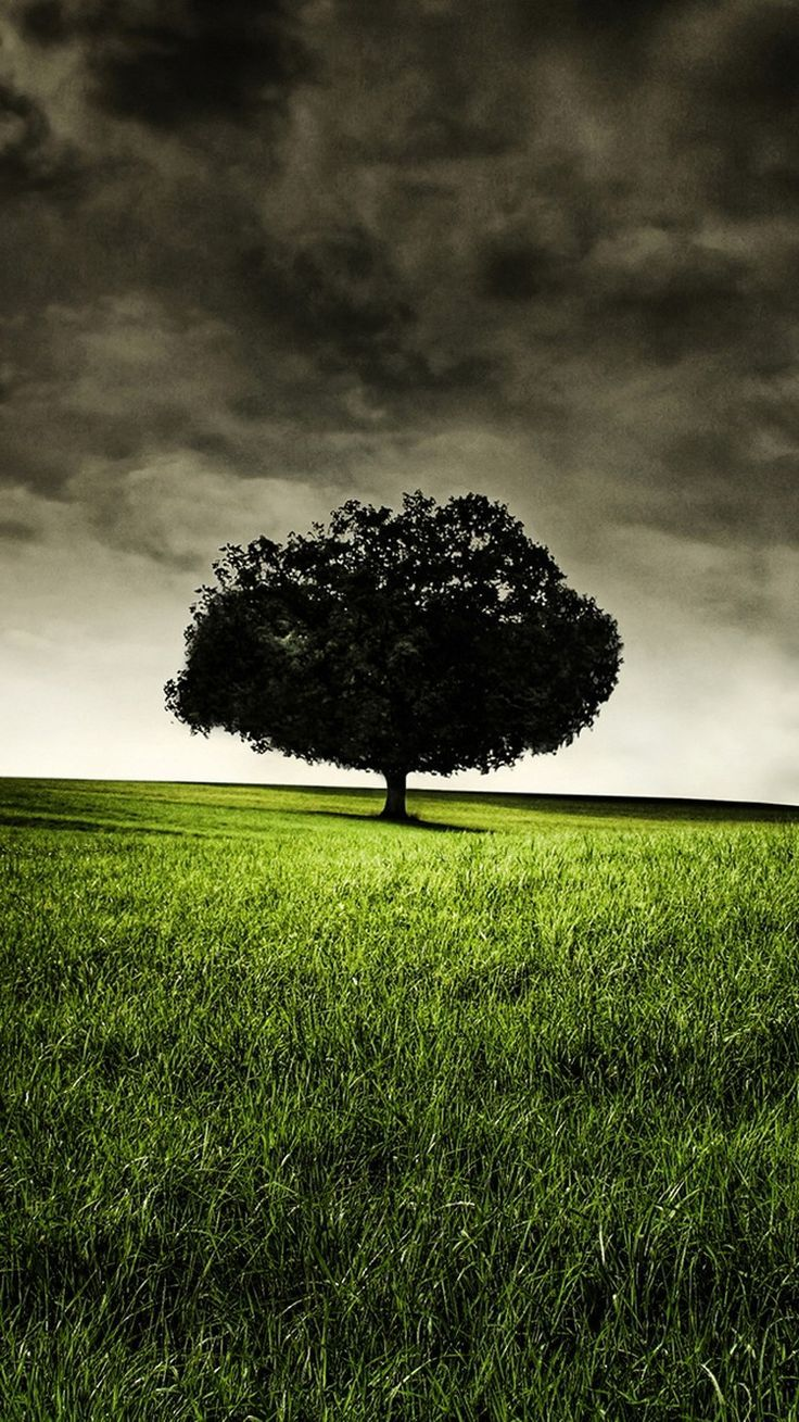 Android Wallpaper Lonely Tree on Hill 4K Android and