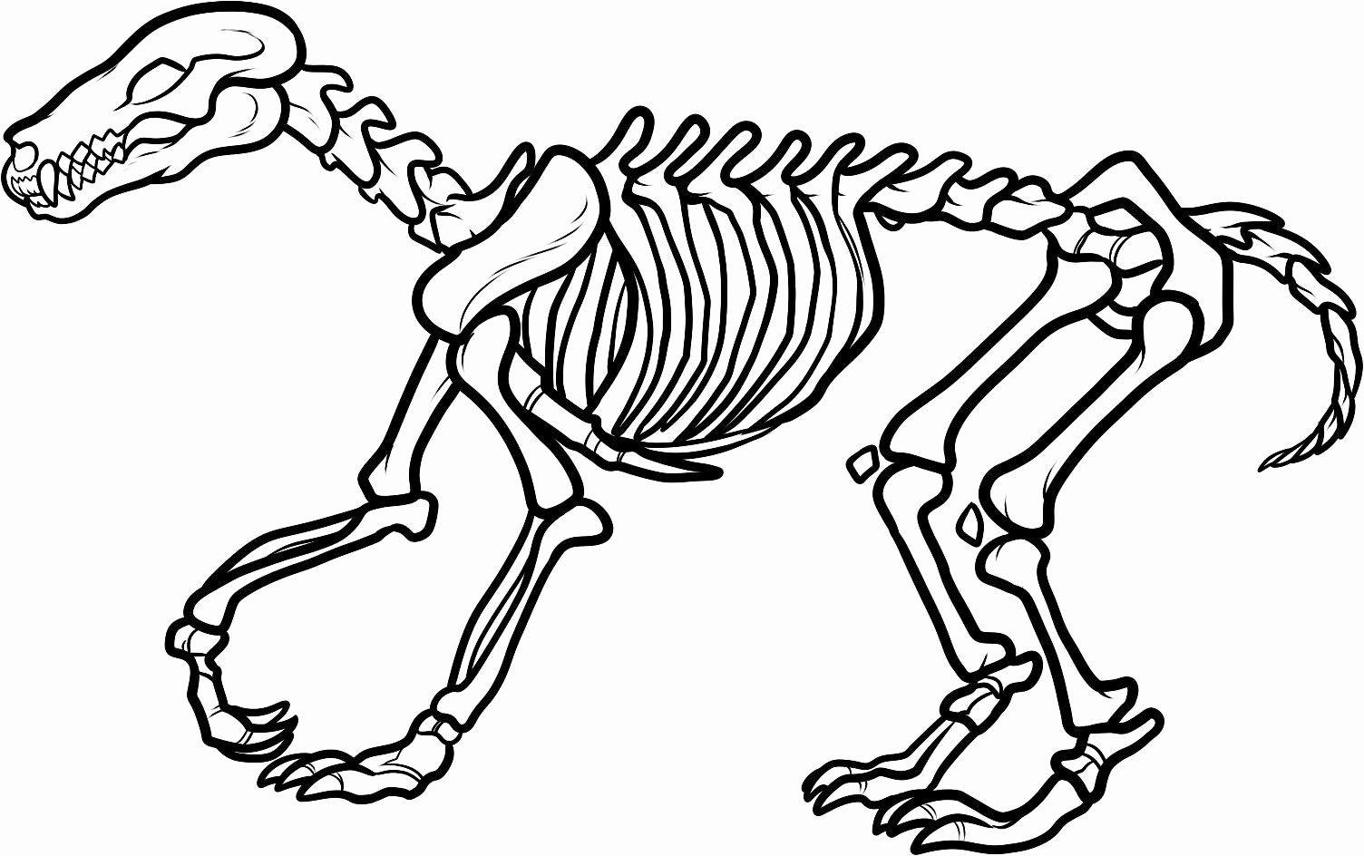 Skeleton Coloring Pages For Preschoolers Beautiful Dog Skeleton Clipart In 2020 Animal Skeletons Dinosaur Coloring Dog Skeleton