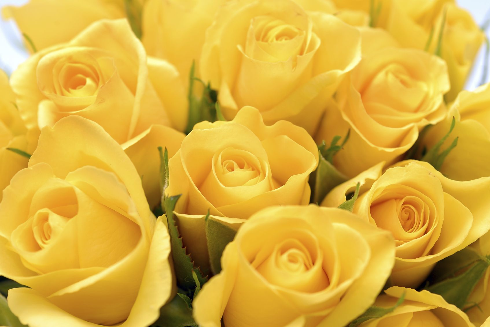 Hd wallpaper yellow flowers - Yellow Roses You Can Post On Facebook Yellow Roses