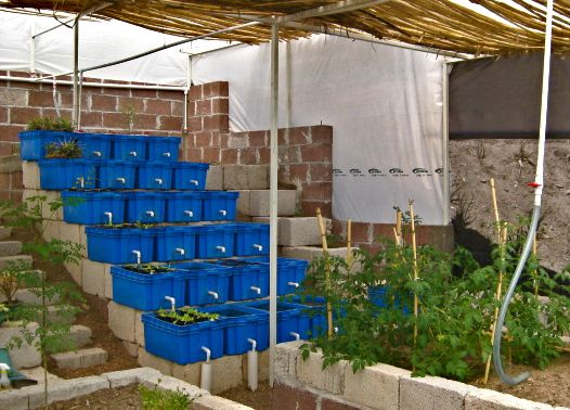 Here is our aquaponics greenhouse which we have nicknamed for Fish garden system