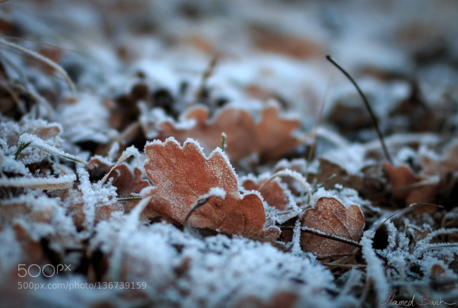 Frozen leaf by bank3d