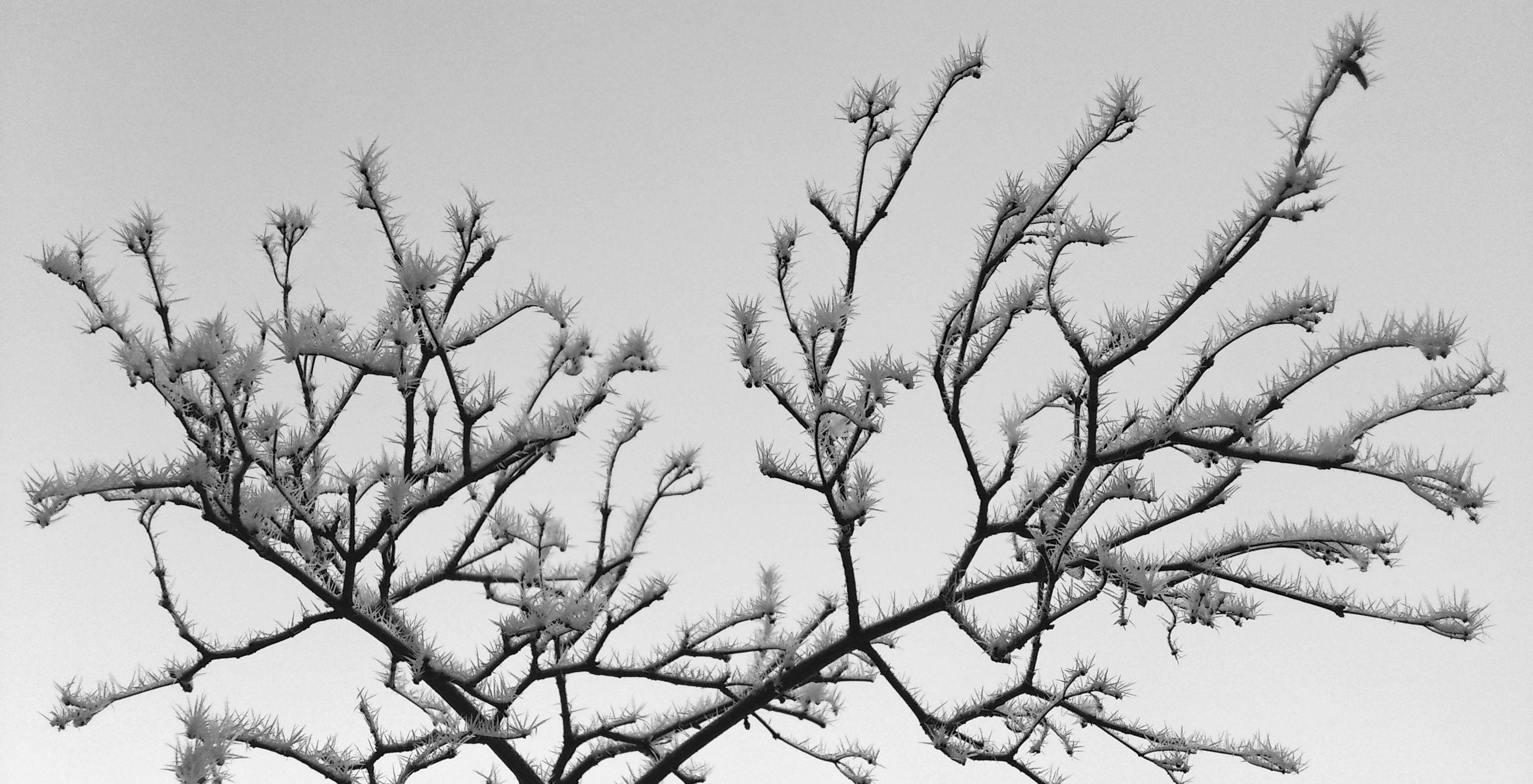 FrostyTreeOnSkogsbacken@Sundbyberg20120304