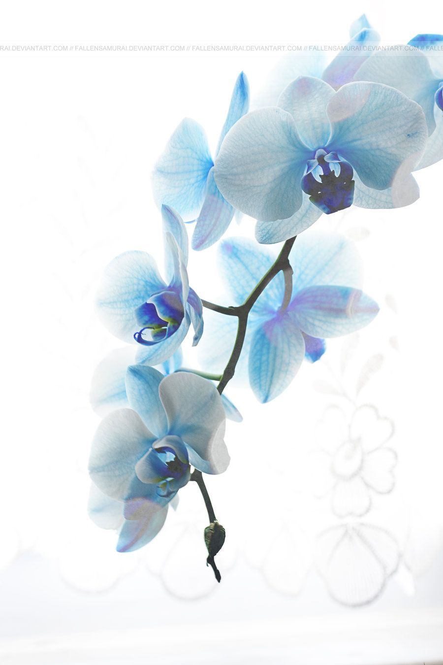 Light Blue Orchid Blue Orchids Watercolor Flowers