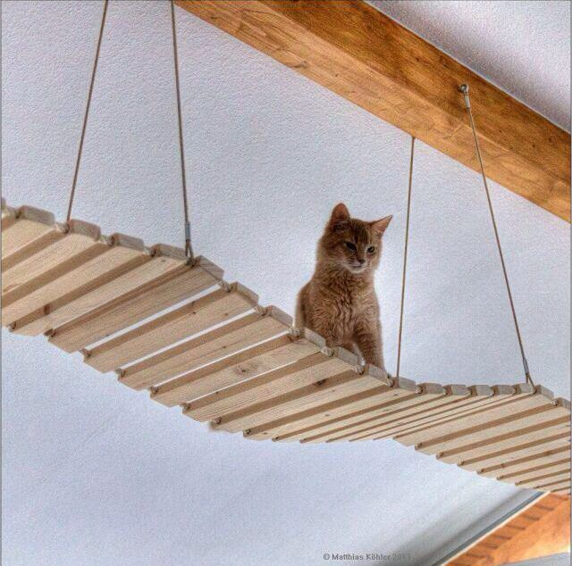 indoor kitty suspension bridge for the home pinterest kitty cat and cat tree. Black Bedroom Furniture Sets. Home Design Ideas