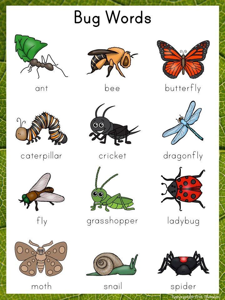 Diy Anleitung Lunchbag Aus Wachstuch Nahen Via Dawanda Com Insects Theme Preschool Preschool Charts Preschool Craft Activities Types of bugs for preschoolers