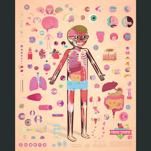 CrashCourse Anatomy and Physiology Poster | Pinterest | School and ...