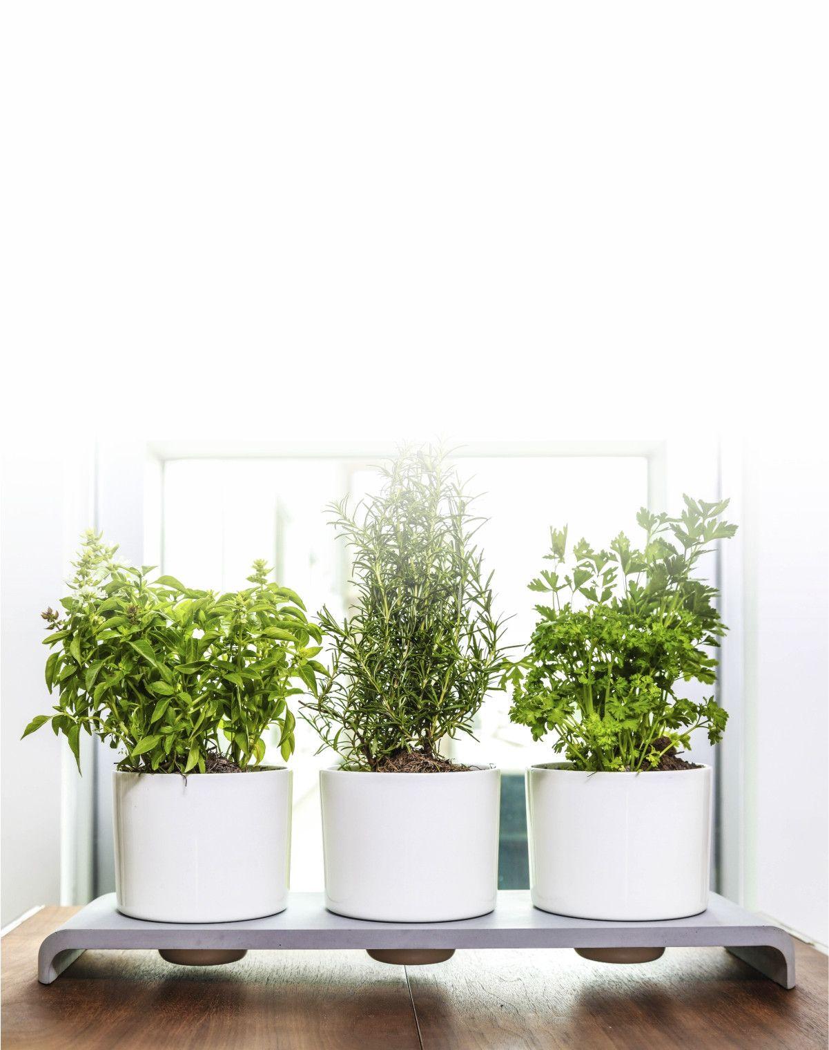 U herb indoor garden office plants plants and indoor - Indoor desk plants ...