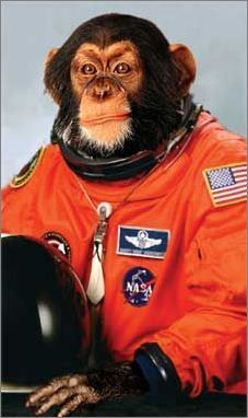 Image result for monkey astronaut