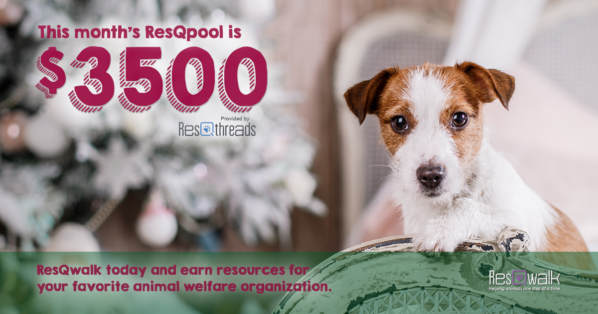 Giving back this holiday season is as easy as walking! Rack up miles so your favorite animal charity can earn part of this month's $3500 ResQpool! http://www.resqwalk.com