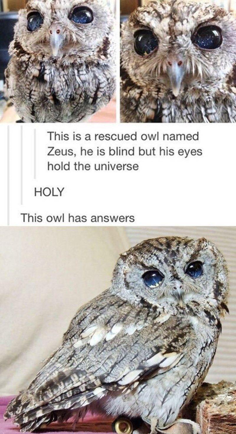 Photo of Those Eyes