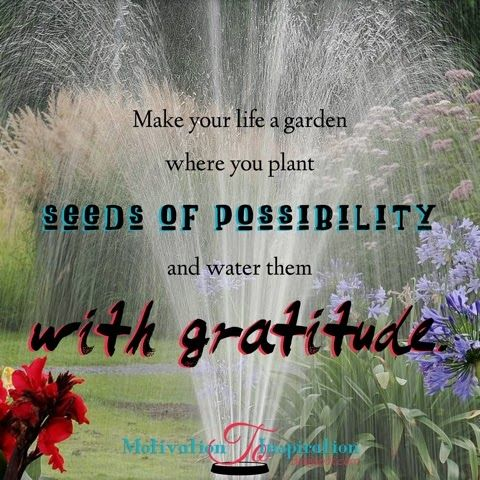 Water seeds of possibly with gratitude