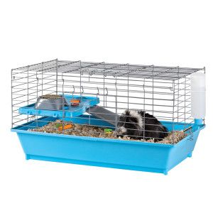 Pin On Guine Pig