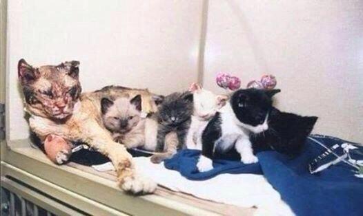 هاشتاق العرب On Twitter Animals Cats Mother Cat