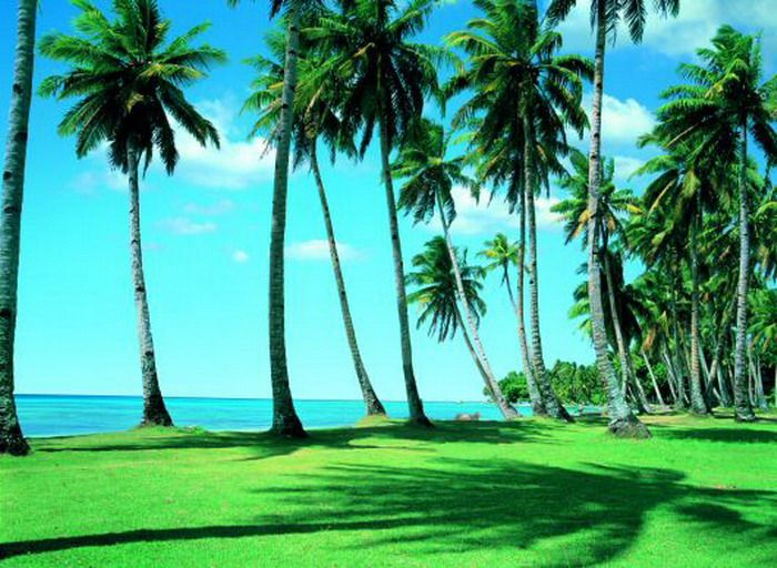 Green and Coconuts Tree Wall Mural