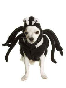 Puppy Wearing Spider Costume - Peel and Stick Wall Decal by Wallmonkeys  sc 1 st  Pinterest & Puppy Wearing Spider Costume - Peel and Stick Wall Decal by ...