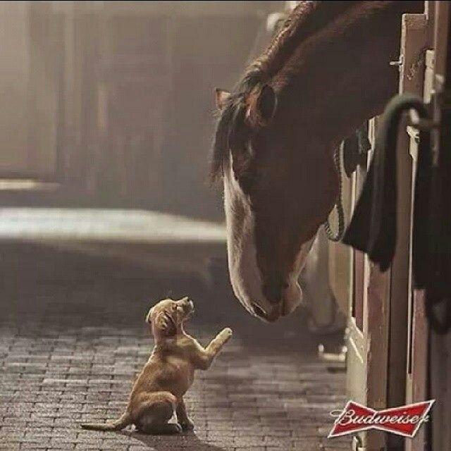 horse&dog