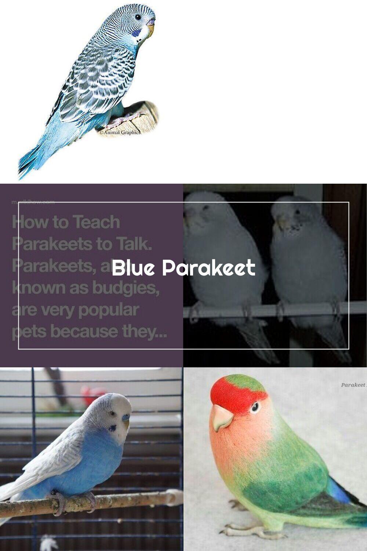 Blue Parakeet For Sale Live Pet Birds Petsmart V 2020 G