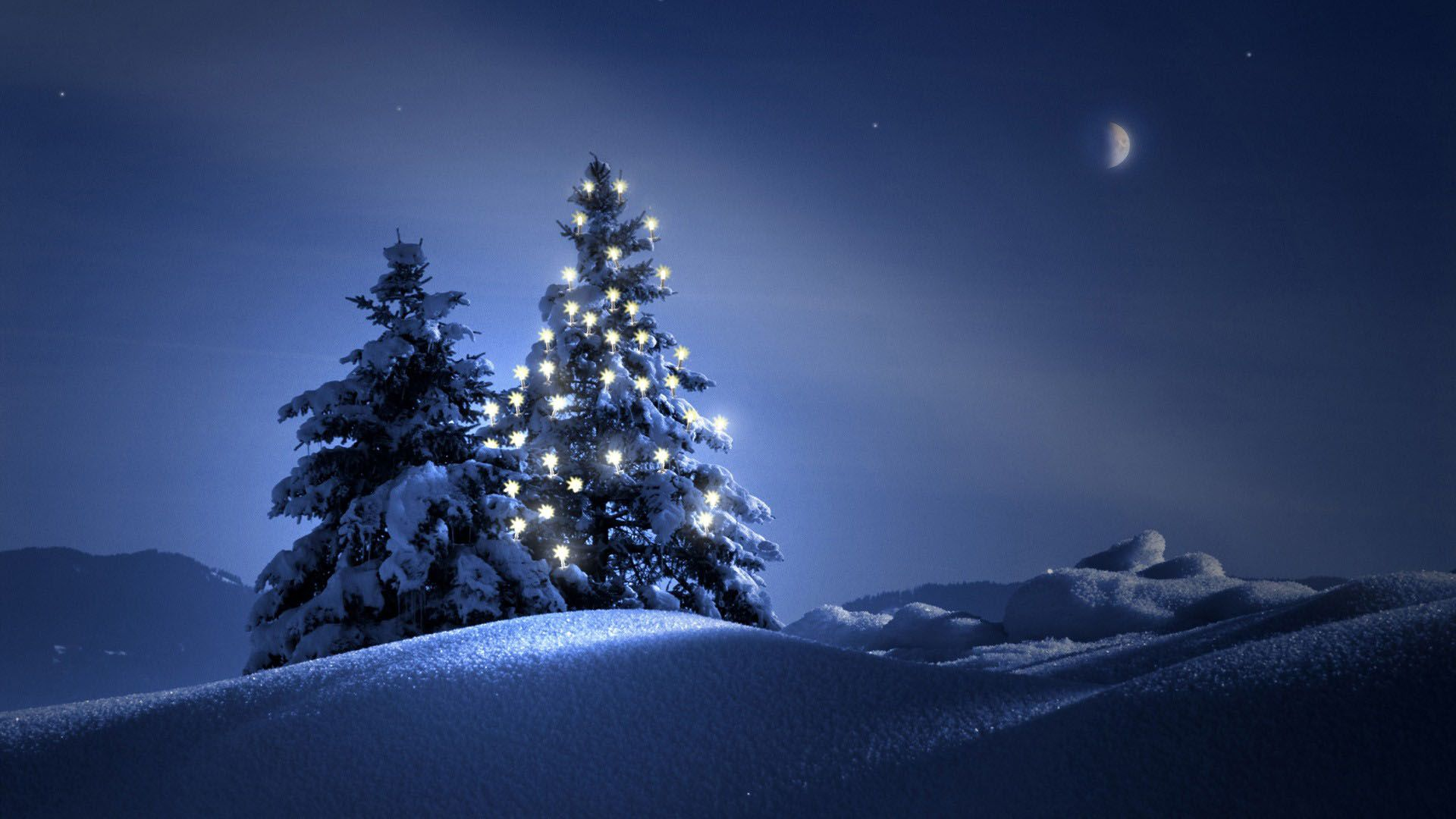 Beautiful Outdoor Christmas Trees At Night  1920X1080  Full