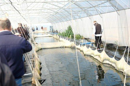 Tilapia Farming | Tilapia farming, Aquaponics